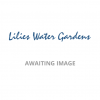Nymphaea Miss Siam-EXCLUSIVE-barerooted