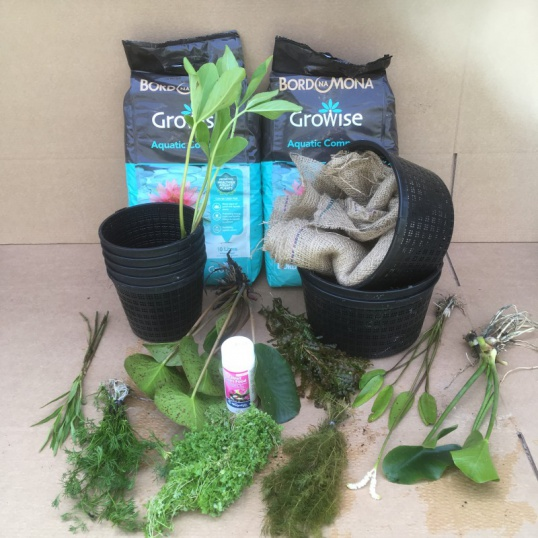 Submerged Pond Plant Collection