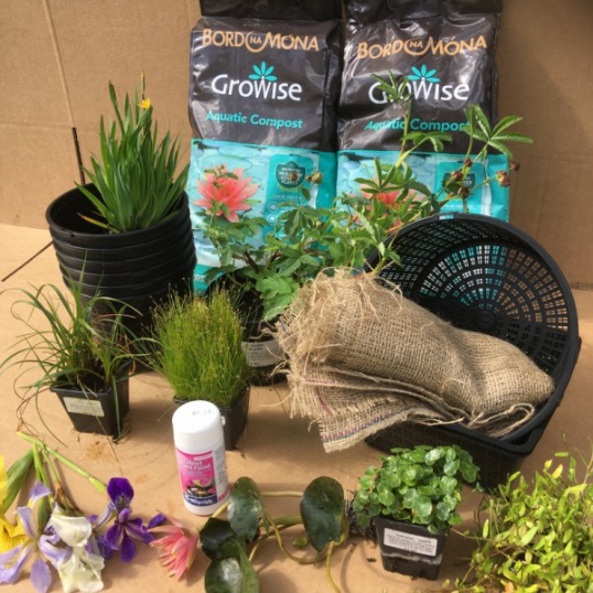 Beginners Pond Plant Collection for small Ponds