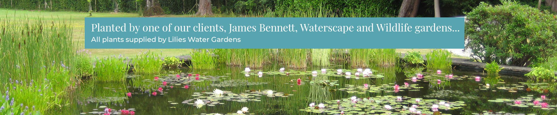 Planted by one of our clients, James Bennett