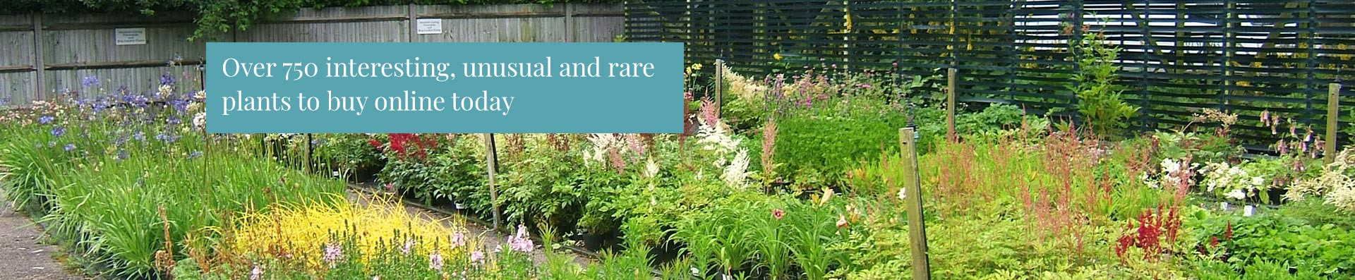Over 750 interesting, unusual and rare plants to buy online today!