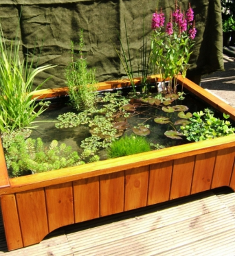 Pond Plants for Containers and Water Features
