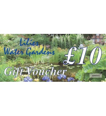 Gift Vouchers and Cards