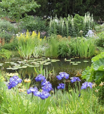 Trade Discounts on Quantity for Large Planting Projects
