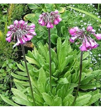 Bog Garden Plants