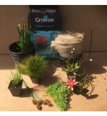 Patio Container Water Gardening Collection