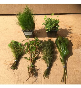 Mixed Oxygenating Plant Collection