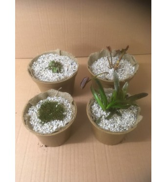 Vi Pots- Biodegradable Pots- 2 Sizes