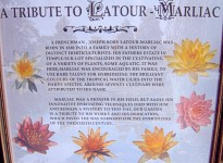 A Tribute to Latour Marliac